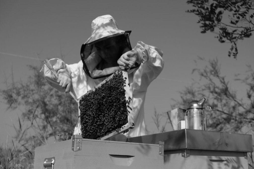 Lavori in apiario
