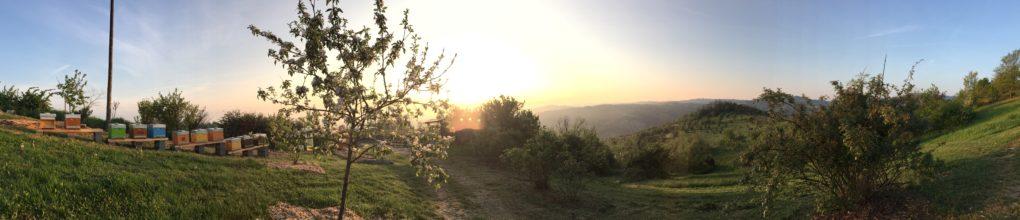 Apiario all'alba